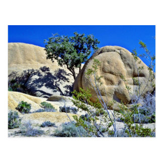 Tree And Shadows On Smooth Boulders Postcards
