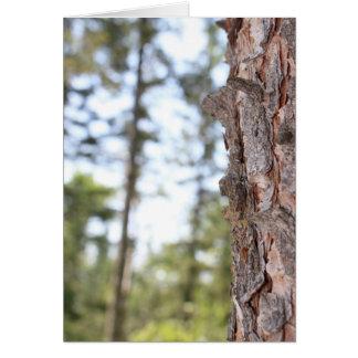 Tree Bark & Forest Card