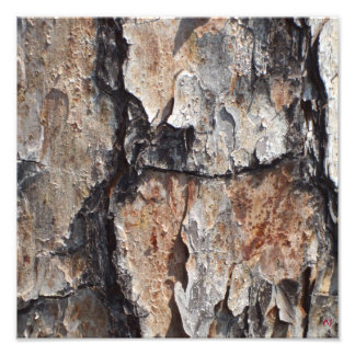 Tree Bark Photographic Print