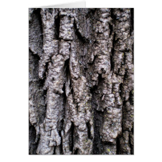 Tree Bark Photography Card