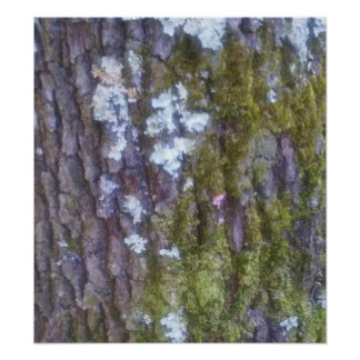 Tree Bark - Poster