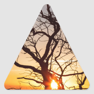 Tree Branches Dancing In The Sunlight Triangle Sticker
