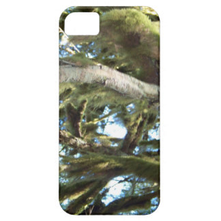 Tree Branches iPhone 5 Cover