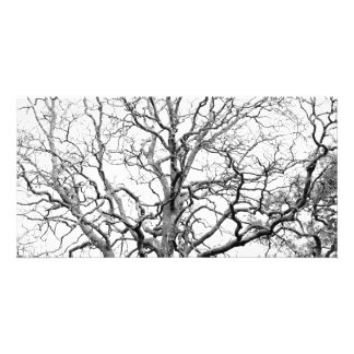 Tree branches photo cards