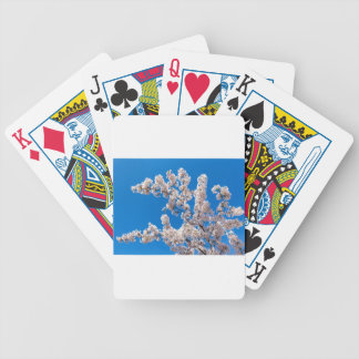 Tree branches with blooming white flowers bicycle playing cards