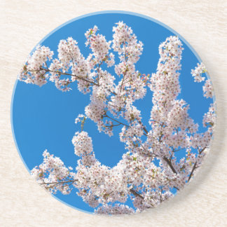 Tree branches with blooming white flowers coaster