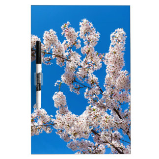 Tree branches with blooming white flowers dry erase board
