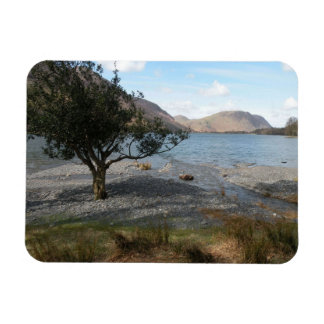 Tree By The Shore Rectangular Photo Magnet