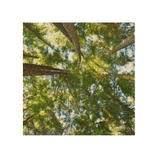 Tree Canopy Wood Print