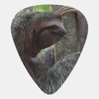 Tree Climbing Sloth Plectrum