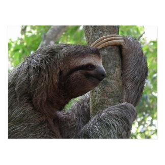 Tree Climbing Sloth Postcard
