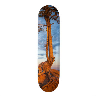 Tree Clings to Ledge, Bryce Canyon National Park Custom Skate Board