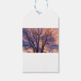 Tree Colors Of The Night Gift Tags
