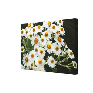 Tree Daisies Stretched Canvas Print
