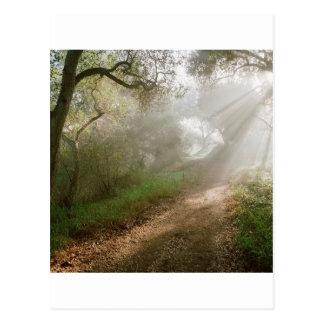 Tree Douglas Preserve Santa Barbara Postcard