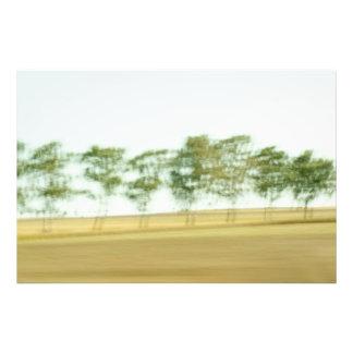 Tree drifts photo print