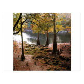 Tree Fall On Calm River Postcards