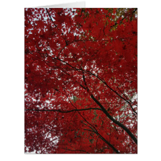 Tree Fall Season Red Brown Autumn Leaves Card