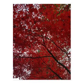 Tree Fall Season Red Brown Autumn Leaves Postcard