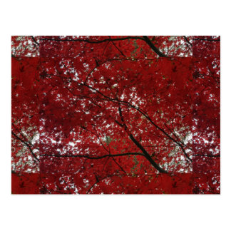Tree Fall Season Red Brown Autumn Leaves Postcard