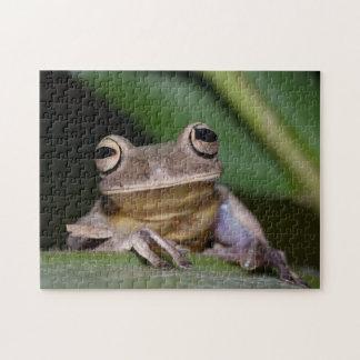 Tree frog 02 Digital Art - Photo Puzzle