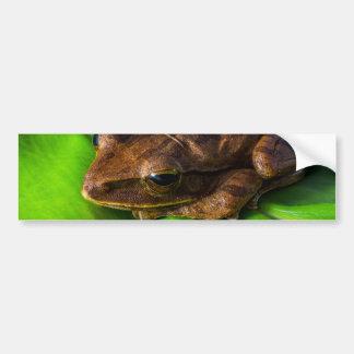 tree-frog-324553 tree frog anuran frog amphibians bumper sticker