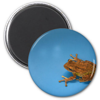 Tree frog against blue background on right fridge magnets