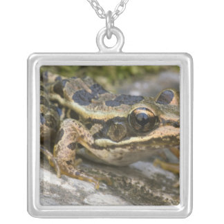 Tree frog at the entrance to small cave, square pendant necklace