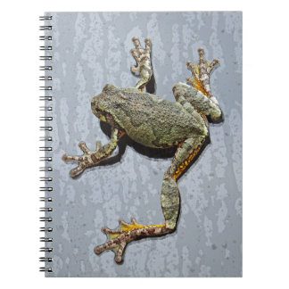Tree Frog Clinging To Window After The Rain Notebook