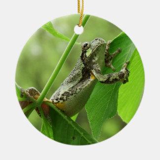 Tree Frog Hanging On Round Ceramic Decoration