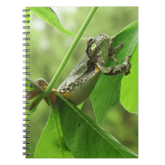 Tree Frog Hanging On Spiral Notebook