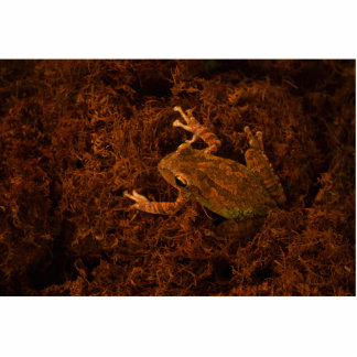 tree frog in moss animal design acrylic cut outs