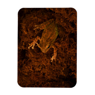 tree frog in moss animal design rectangle magnet