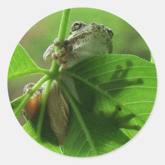 Tree Frog Leaf Shadows Classic Round Sticker