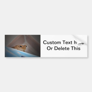 tree frog looking at viewer on blue bumper sticker