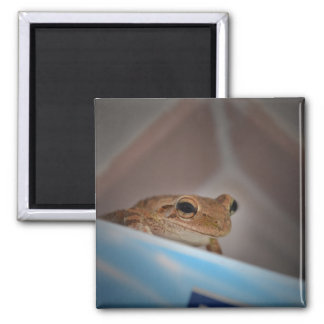 tree frog looking at viewer on blue refrigerator magnet