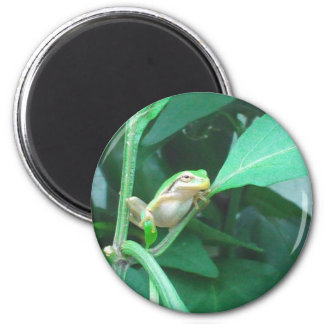 Tree Frog Fridge Magnets