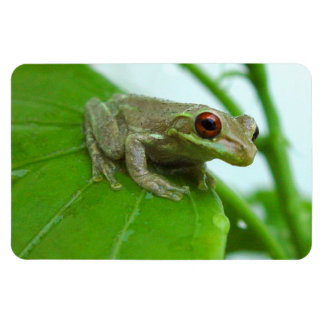 Tree frog on leaf Flexi Magnet