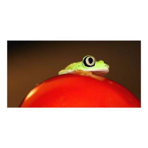 tree frog photo greeting card
