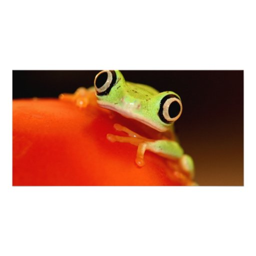 tree frog photo card template