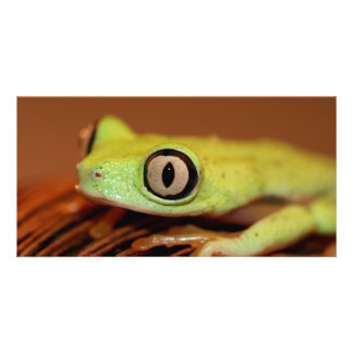 tree frog photo cards