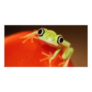 tree frog photo card