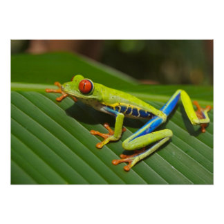 Tree-frog Poster