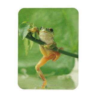 Tree Frog Rectangular Photo Magnet