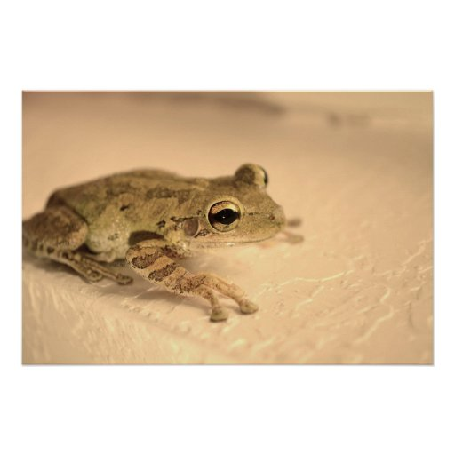 tree frog sepia looking right animal image poster