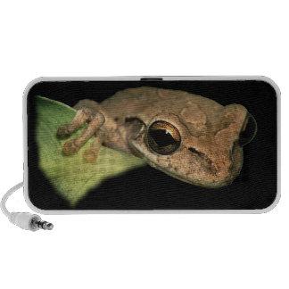 tree frog speaker system