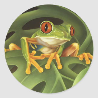 Tree Frog Sticker