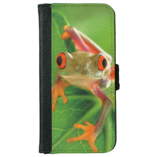 Tree Frog Wallet Case iPhone 6 Wallet Case