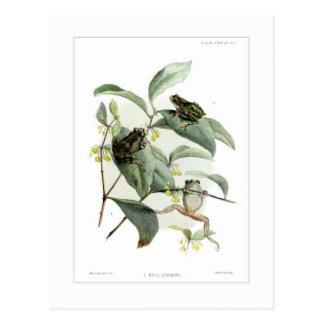 Tree frogs postcard