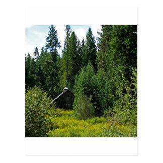 Tree Green Shack Postcard